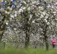 FSP_APPLE_BLOSSOM_0001