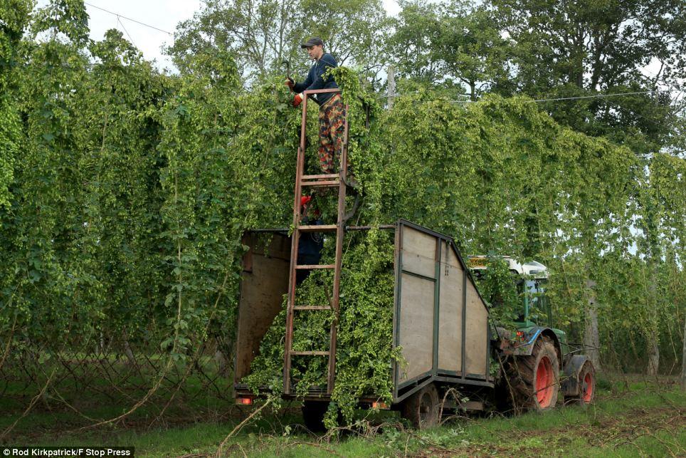 Hops Stocks Farm