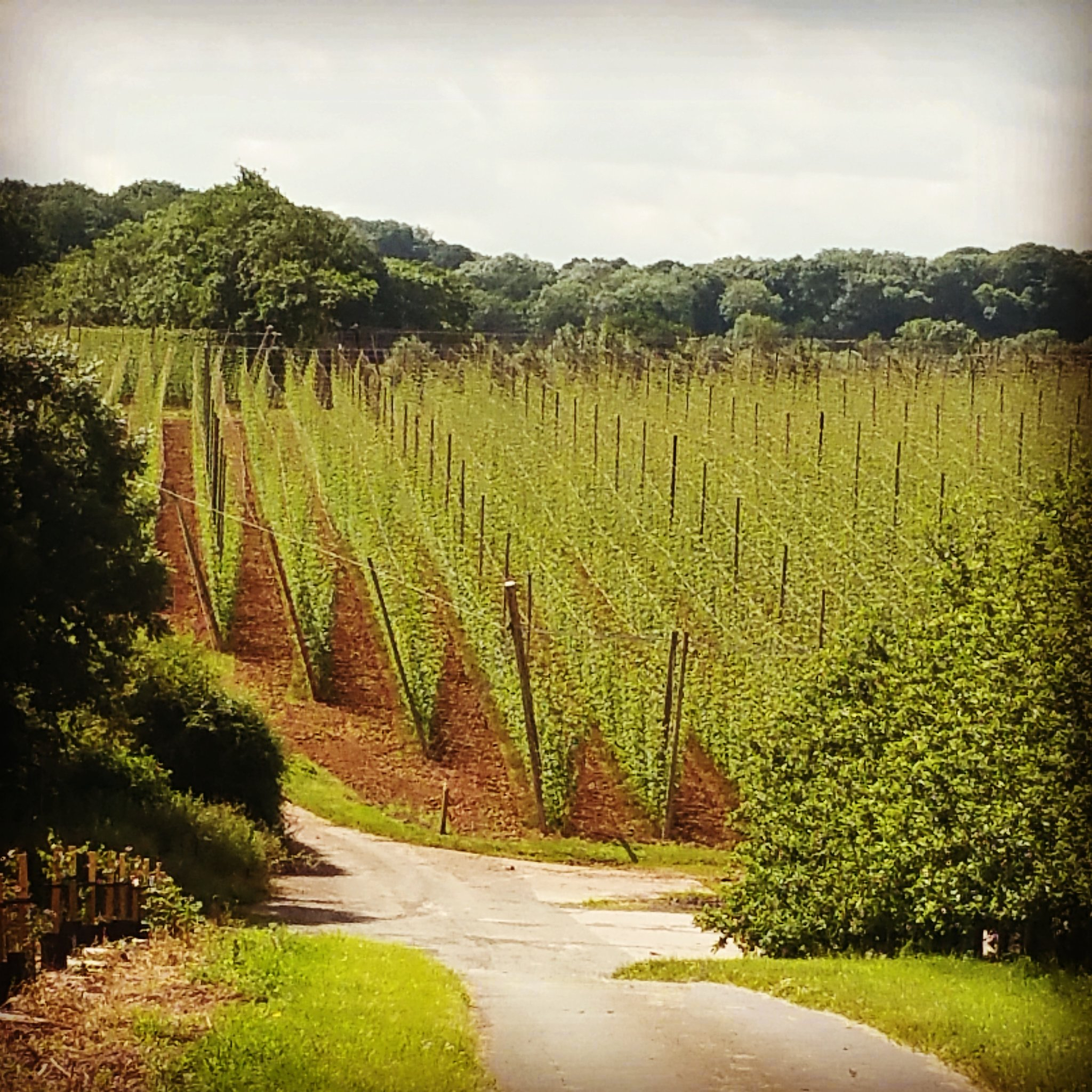 how to start a hops farm